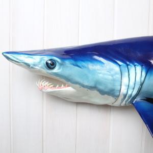 アオザメ レプリカ 壁掛け 半面 Shortfin mako shark サメフィギュア※受注生産(代引き不可)|kaiyokobo