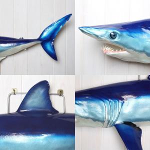 アオザメ レプリカ 壁掛け 半面 Shortfin mako shark サメフィギュア※受注生産(代引き不可)|kaiyokobo|03