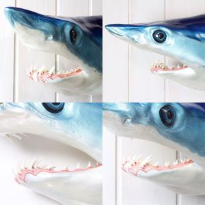 アオザメ レプリカ 壁掛け 半面 Shortfin mako shark サメフィギュア※受注生産(代引き不可)|kaiyokobo|04