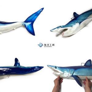 アオザメ レプリカ 壁掛け 半面 Shortfin mako shark サメフィギュア※受注生産(代引き不可)|kaiyokobo|05