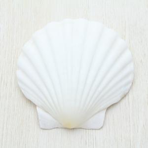 イタヤガイ 貝殻 ブライダル ウェルカムボード フォトフレーム パーツ 約10〜12cm|kaiyokobo