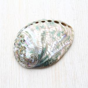 クジャクアワビM 貝殻 インテリア 約6〜8cm|kaiyokobo
