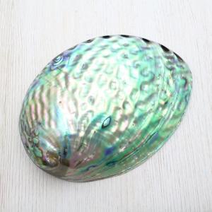 ニュージーランドアワビ(パウア貝) 貝殻 インテリア 約11〜12cm|kaiyokobo