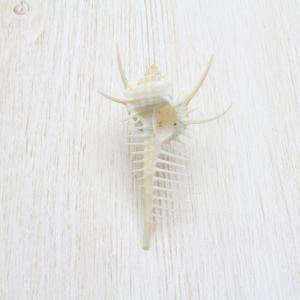 貝殻(ホネガイ)ミニ1個 ブライダル ウェルカムボード フォトフレーム パーツ 約3〜5cm|kaiyokobo