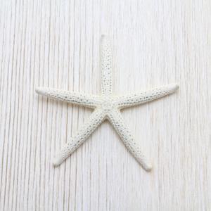 アオヒトデSS(スターフィッシュ)ブライダル ウェルカムボード パーツ 貝殻 約3〜5cm|kaiyokobo
