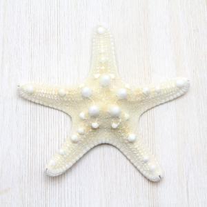 コブヒトデL(スターフィッシュ)ブライダル ウェルカムボード パーツ 貝殻 約12〜14cm|kaiyokobo