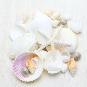 【人気No.1】キラキラビーチシェル アオヒトデ 貝殻 セット ブライダル ウェルカムボード フォトフレーム シェルパーツ 詰め合わせ100g|kaiyokobo
