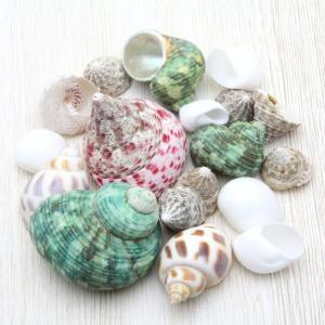 ヤドカリ貝殻詰め合わせセット 殻 引っ越し 交換用 採集や自由研究に最適!!|kaiyokobo