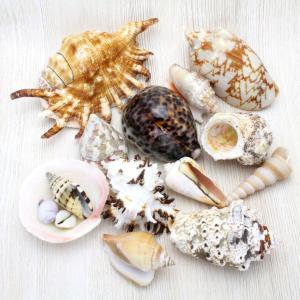マリンシェルパック 貝殻ミックス セット|kaiyokobo