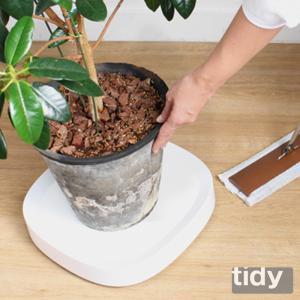 tidy プランタブル 全3色 植木鉢トレー 観葉植物 ティディ tidy テラモト グリーン 植物植物 キャスター付|kajitano