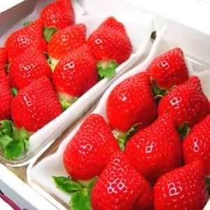 福岡県産いちご あまおう  九州を代表するブランド苺!甘くて...