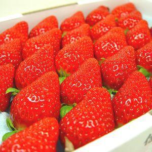 徳島県佐那河内村産 さくらももいちご 28粒入り ももいちごの里で育った苺の新品種  発送:3月上旬〜3月下旬の間|kajitsuan-y