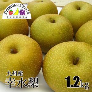 九州産和梨(幸水梨) 1.2kg |kajitsumura