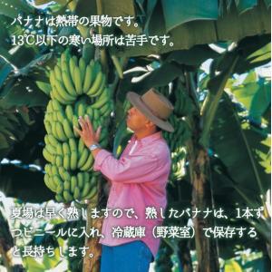 フィリピン産バナナ 13kg|kajitsumura|03