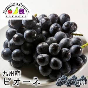 九州産ぶどう・ピオーネ3房 kajitsumura