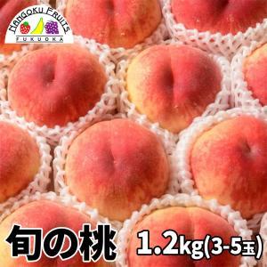目利き桃 6玉 kajitsumura