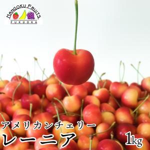 最高級アメリカンチェリー・レーニア1kg箱|kajitsumura