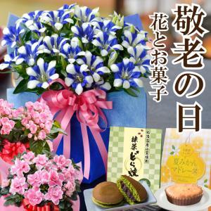遅れてゴメンね!敬老の日 ギフト プレゼント 選べる季節の鉢花リンドウ、におい桜、松ぼっくり盆栽、アザレアと選べるスイーツセット
