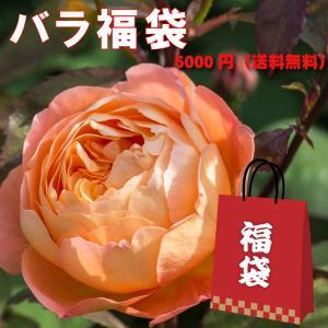 訳あり処分(多少病害虫あり)バラの福袋/イングリッシュローズバラ苗【ER1、バラ苗2、その他1】