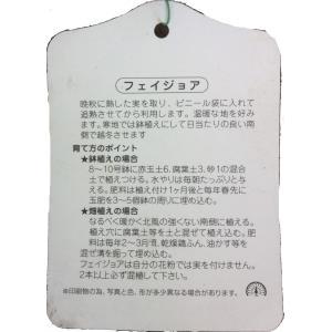 フェイジョア kajoenjp 02