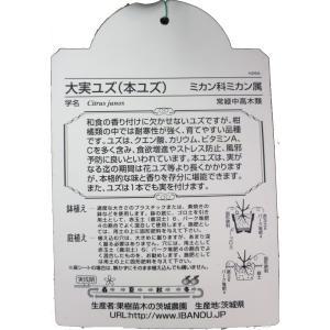 特選果樹苗★大実ユズ(本ユズ) kajoenjp 02