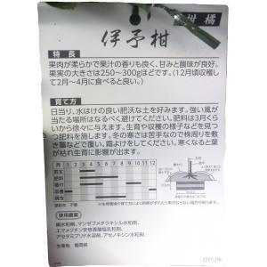 特選果樹苗★伊予柑|kajoenjp|02