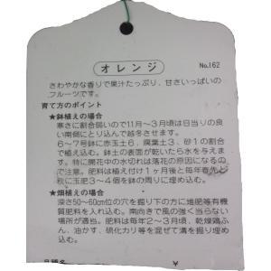特選果樹苗★オレンジ(清見)|kajoenjp|02