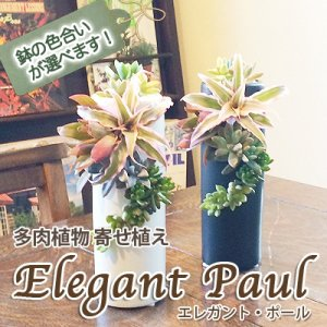 送料無料 鉢の色合いが選べる 多肉植物寄せ植え エレガント ポール