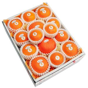 柑橘詰合せ5500円(セット 詰め合わせ)