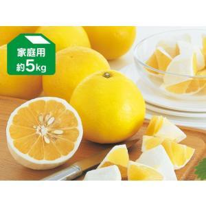 ニューサマーオレンジ約5kg-家庭用(日向夏)