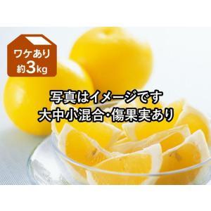 ワケありニューサマーオレンジ約3kg(日向夏)