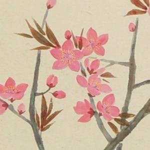 掛け軸 桃の花 (三宅和光)  【掛軸】【半間床】【丈の短い掛軸】【ひな祭】【春】 kakejiku 03