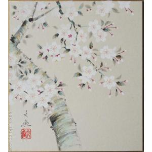 高級色紙「桜」文魚(色紙絵)|kakejiku