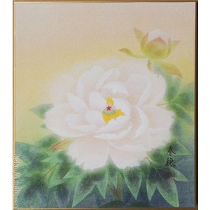 高級色紙「富貴花」春穂(色紙絵)|kakejiku