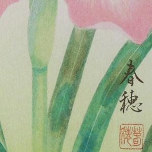 高級色紙「菖蒲」春穂(色紙絵)|kakejiku|02