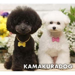 【犬の首輪】【犬 首輪】【猫の首輪】ネームタグ★ネックレス kamakuradog