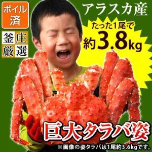 タラバガニ 姿 超特大 ボイル たらば蟹 アラスカ産たらばがに姿(1尾約3.8kg)かに カニ 蟹 タラバ たらば タラバ蟹(味噌抜き処理済)|kamasho