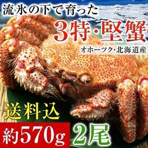 毛ガニ 北海道産 毛蟹 オホーツク産 毛がに 姿 ボイル冷凍 大サイズ約570gを2尾|kamasho