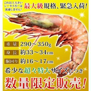 皇帝の海老 天然 シータイガー 超々特大サイズ エビ えび 海老 冷凍 1尾 290-350g 約33-34cm 個包装パック|kamasho