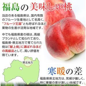 桃 ギフト フルーツ もも 福島の桃 (特秀品 1.8kg 6から7玉入) 1箱 お盆明け 8月下旬発送 白桃系品種 kamasho 06
