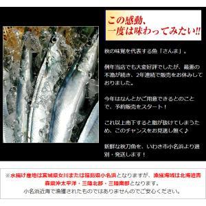さんま サンマ 秋刀魚 15尾入 1尾あたり約120〜140g 冷蔵 発送時期は9月末〜10月頃 (他商品と同梱不可) kamasho 03