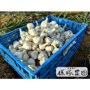 丹波篠山産 ニンニク 1キロ kamatsukafarm