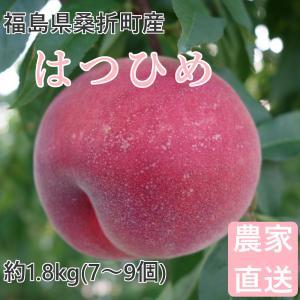 品種  :はつひめ 福島県でのみ生産が限定された品種。柔らかめ。 内容量 :約1.8kg(7〜9個)...