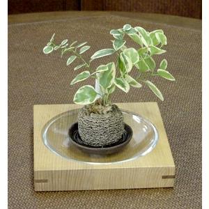 セン無垢材の苔置き kamizen