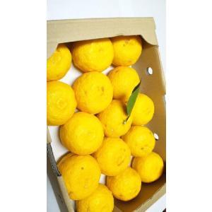 和歌山産 ゆず(柚子)3kg(ゆずジャム・ゆず茶・ゆずみそ(味噌)・ゆず湯・にどうぞ)