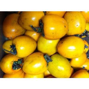 つるし柿(干し柿)用渋柿(しぶ柿)10kg(サイズ混)熊本・愛媛・徳島・和歌山産