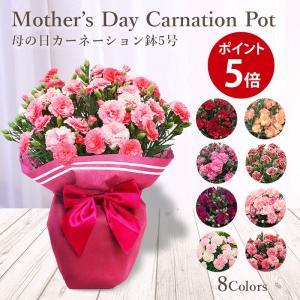 母の日 ギフト 2021 カーネーション 鉢植え 6色選択 赤 ピンク オレンジ アプリコット パープル 2色ピンク 送料無料 プレゼント 花 フラワー 母の日ギフト 花鉢|kamon-hanay