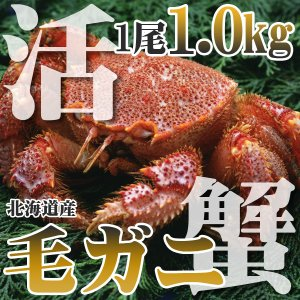 カニ かに 毛ガニ 1.0kg 超特大 極上 活 毛ガニ 稚...
