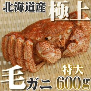 カニ かに 毛ガニ 600g 超特大 極上 毛ガニ 北海道産...