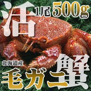 カニ かに 毛ガニ 500g 大中 極上 活 毛ガニ 稚内産...